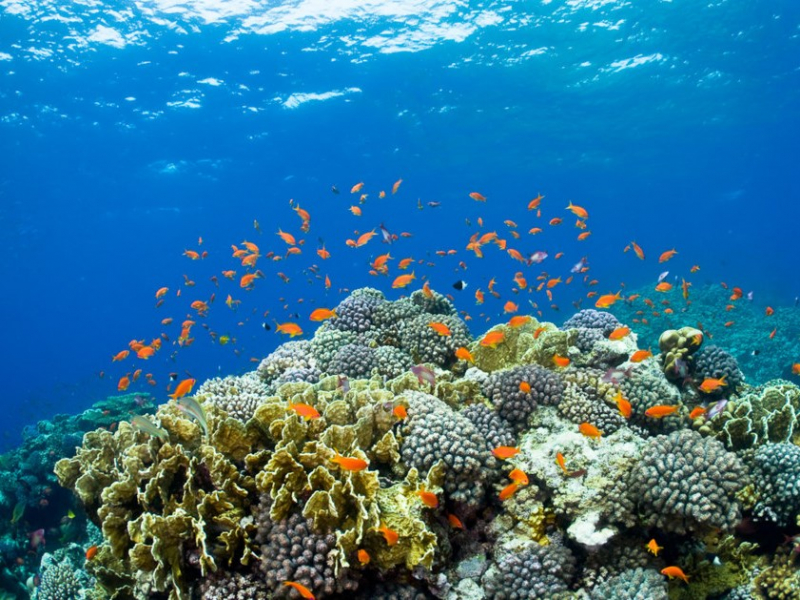 northern-red-sea-scuba-diving