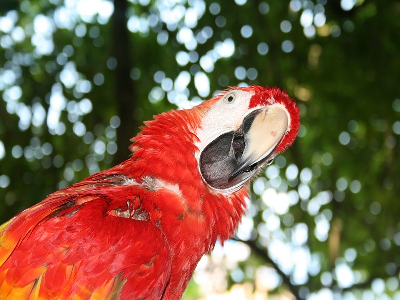 Parrot-Tropical-Red-Confused-Bird-Question-1070624